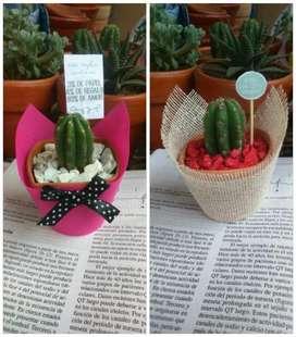 Recuerdos Macetas Plantitas Suculentas Cactus para matrimonio misa bautizo babyshower cumpleaños comunion