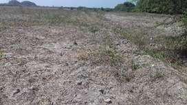 Se venden 49 hectáreas en Jayanca. Con pozo. tubular.