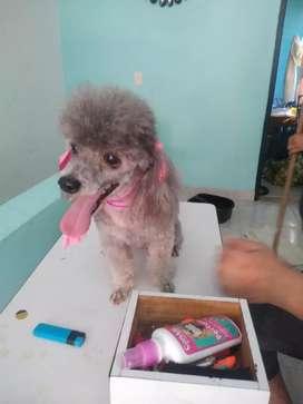 Servicios peluquería canina al domicilio corte erelaje de glándula corte de uñas.