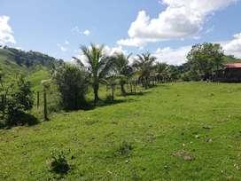 Finca Granja Porcicultura Maceo, 80 Ha