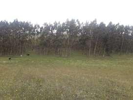 Terreno de 6 hectáreas