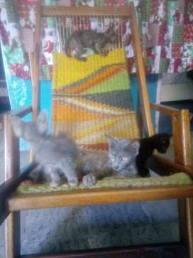Bellos gatos en adopción