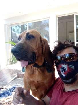Perruqueria a Domicilio Jagger dale un respiro a tu mascota
