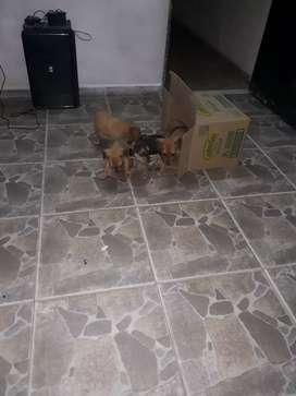 Perritos para Adoptar