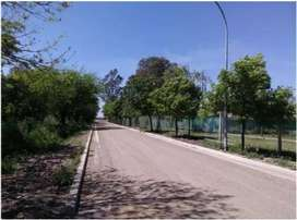 Terra Nostra!! - etapa 3 - Camino San Carlos