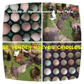 Venta de huevos criollod