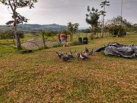 Venta de aves