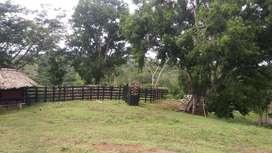 Se vende finca de 52 hectáreas cerca a Arboletes y Montería, en Córdoba