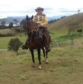 Busco trabajo como palafrenero o cuidador equino