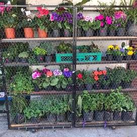 Vendo floristeria -tienda esoterica