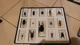 Colección Bichos National Geographic