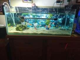 Acuario de 160 litros con 34 peces
