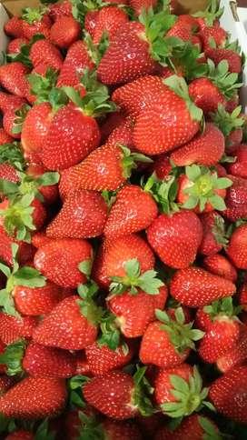 Vendo fresas