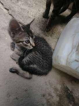 Se da en adopción hermosa gatica