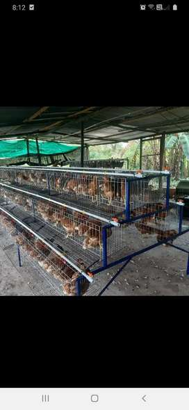 Comederos y bebederos jaulas y nidos