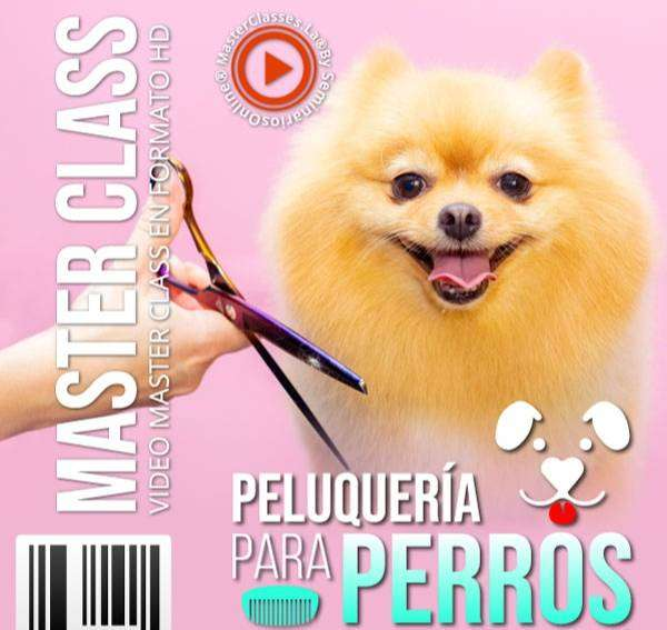 PELUQUERIA CANINA CURSO MASTERCLASS