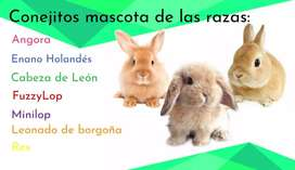Conejitos Disponibles Mascota