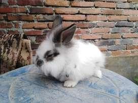 Conejos mascotas