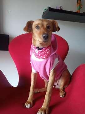 CARMELITA perrita mestiza en adopción 12 meses