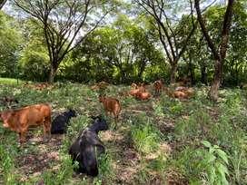 Se vende 34 hectareas