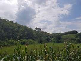 Venta Finca con Plantación Teca - S. Ibañez