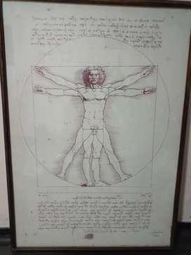 Cuadro de Da Vinci hombre de vitruvio