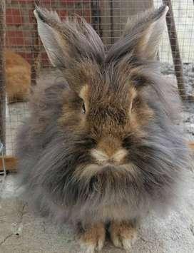 Animales conejos
