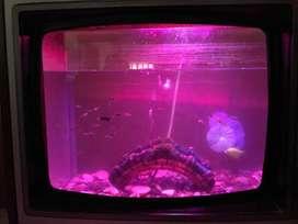 tele acuario
