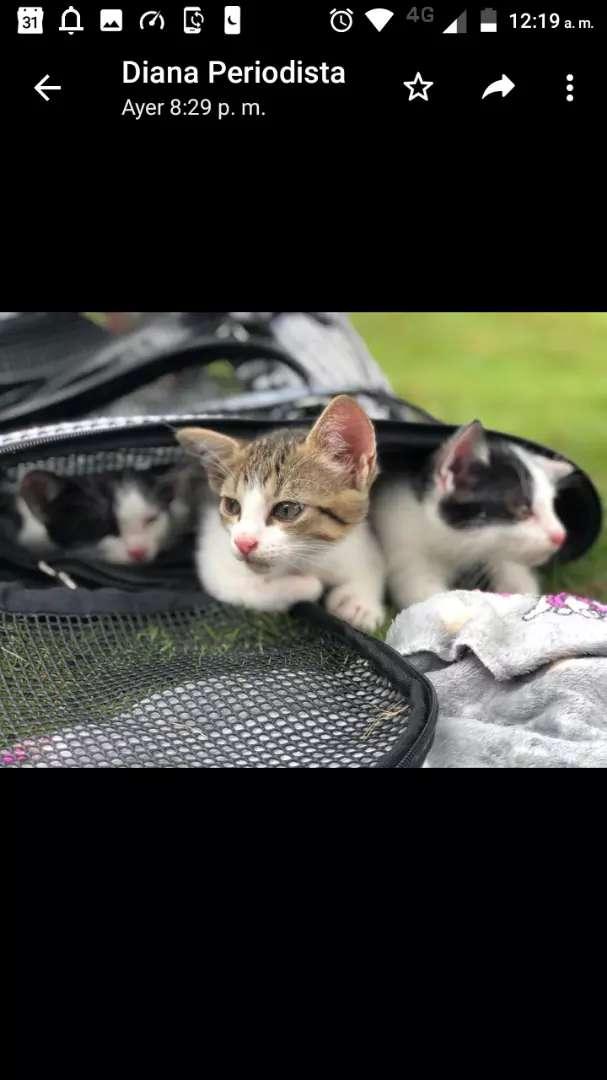 Adopta un lindo gatito 0