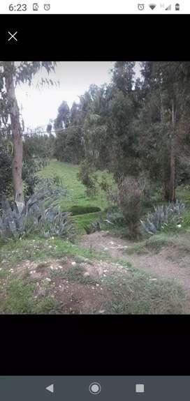Venta terreno Matahuasi Concepción