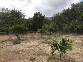 Venta de  Quita con gran terreno, Sector Zoológico  de Guayllabamba