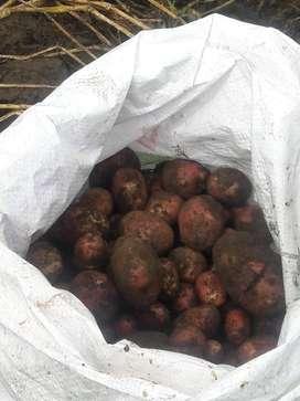 Se vende papas, super chola, orgánica. 10$ el quintal