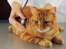 Servicio veterinario a domicilio en envigado