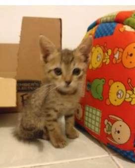 Gaticas en adopción