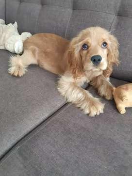 Hermoso cachorro de 3 meses bacunas aldias