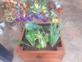 Plantas y cactus