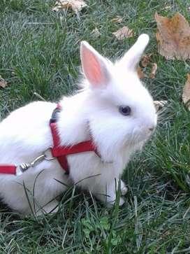 Conejo y coneja
