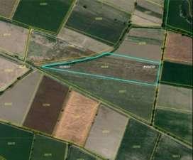 Venta de Terreno Agrícola en Pisco
