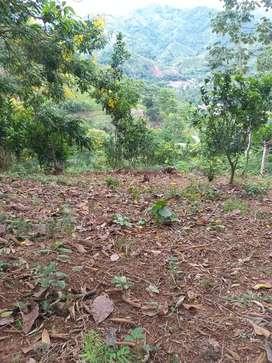 Finca  río negro  sector la Ceiba a 10 minutos de la central 150 millones