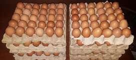 Venta de cubetas de huevos desde 3.50