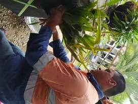 Servicio de jardinería y venta de tierra abonada( siembras, abonadas, palteado, desmalezado, guadañadas, podas)