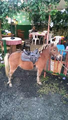 Vendo Pareja de Ponys