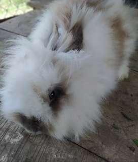 Conejos de venta