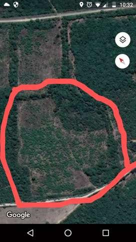 Vendo terrenos de 7 y 11 hectareas