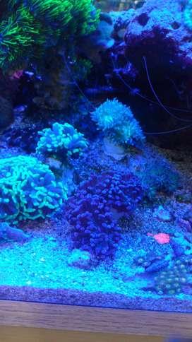 venta de corales
