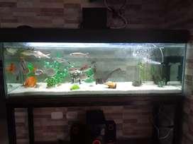 Se vende pecera o acuario grande incluye 10 peces