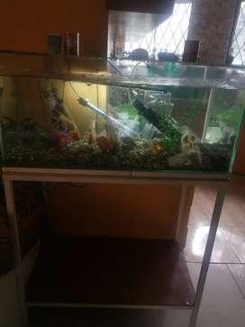 Vendo pecera con peces y su mueble