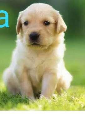 venta cachorros