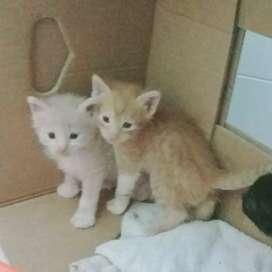 Gatitos en adopción machos y hembras