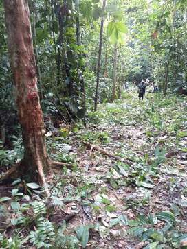 105 hectareas de selva virgen con potencial economico muy alto ATENCION INVERSIONISTAS- 1 dolar por metro!